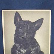 SALE Vintage Scotch Terrier Postcard...Alfred Mainzer...Belgium