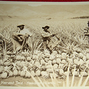 SALE Black Americana Unused Early Postcard Pineapples at Harvest Time Hawaiian Islands