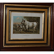 1885 CHILLINGHAM CATTLE Chromolithograph Print by L. Prang & Co. - Published by Selmar Hes