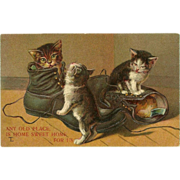 SOLD Embossed Vintage Postcard of Three Cats in Shoes - 1909 - Red Tag Sale Item