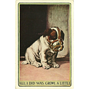SOLD Vintage Postcard of Puppy with a Muzzle - Early 1900's - Red Tag Sale Item