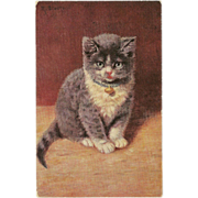 SOLD Vintage Postcard Signed M. Stacks of Gray and White Kitten or Cat - Red Tag Sale Item