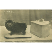SOLD Real Photo Postcard of Tiny Kitten on a Dish - Poor Little Mite - Red Tag Sale Item