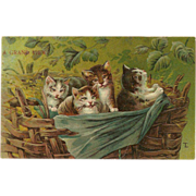 SOLD Embossed Vintage Postcard of Four Kittens in a Basket - Red Tag Sale Item