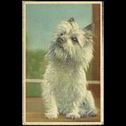 SOLD Vintage Mainzer Postcard of White Terrier Dog - Westie