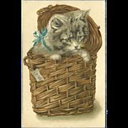 SOLD Embossed Vintage 1909 Postcard of Kitten or Cat in a Wicker Basket - Red Tag Sale Item
