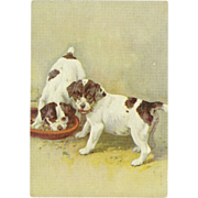 SOLD Advertising Embossed Postcard for De Reszke Cigarettes - Smooth Fox Terriers - Red Tag Sa
