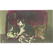 Vintage German Rotophot Tinted Photo Postcard of Three Cats