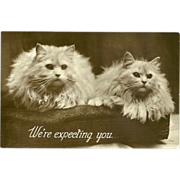 Vintage Glossy Photo Postcard of Two Persian Cats