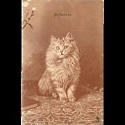 Raphael Tuck Undivided Postcard of Persian Cat by Landor