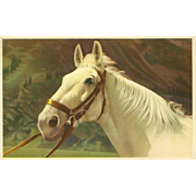 SOLD Alfred Mainzer Advertising Postcard with White Horse - Printed in Belgium