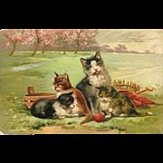 Embossed 1908 PFB Postcard of Cat and Three Kittens