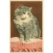 SOLD Vintage Postcard of Handsome Gray and White Cat or Kitten by Mainzer