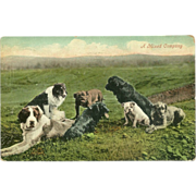 SOLD Early 1900's Real Photo Postcard of Group of Different Breeds of Dogs