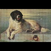 SOLD Vintage Postcard of Newfoundland Dog by Landseer