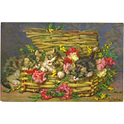 Basketful of Kittens Postcard Signed by D. Merlin