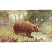 Raphael Tuck Oilette Postcard of the Brown Bear - Wild Animals Series