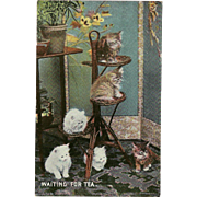 Vintage Early 1900's Postcard of Six Kittens or Cats Waiting for Tea