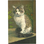Stehli Freres Vintage Postcard of Gray and White Cat on Window Sill