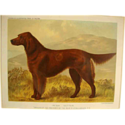"""Irish Setter"", Cassell's Illustrated Book of the Dog"""