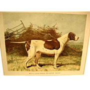 """Pointer"", Cassell's Illustrated Book of the Dog"