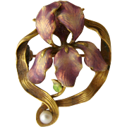 Art Nouveau Enameled Iris Pin/Pendant w/ Pearl Ca 1900