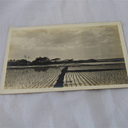 Hawaiian R J Baker Photo Postcard Rice Field