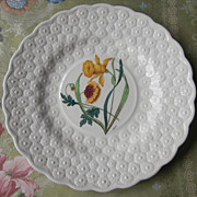 Spode Daffodil Alden Daisy Plate hand Painted Vintage China