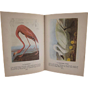 SALE Audubon's Birds of  America Hard Back Book Popular Edition 1950