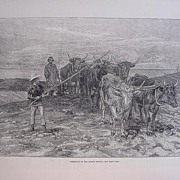 'Ploughing On The Sussex Downs' - Illustrated London News Nov. 5th 1881