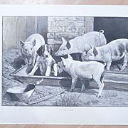 "Full Page Illustrated London News 1895  ""J'Y Suis j'y Reste"""