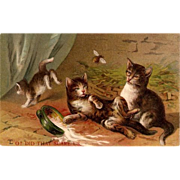 """Did That to Scare Us"" Cats 1909 Postcard"
