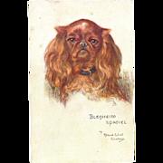 Tucks Blenheim Spaniel Maud West Watson Dog Postcard