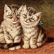 M Stocks Tabby Kittens/Cats Postcard #2