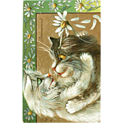 Louis Wain 1907 Fluffy Cats Postcard