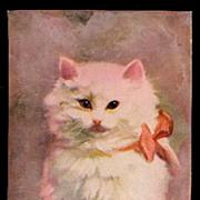 Kenyon 'Fuzzy Wuzzy' White Cat 1908 Postcard