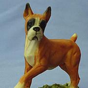 """Boxer dog w ball  England 3"""""""