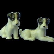 "1930 Fox terrier Schnauzer pups Germany 3"""