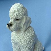 "SALE ..vintage 1950s Rosenthal Poodle 6"" mint crisp curls"