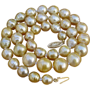 SOLD Special Sale ! Gorgeous 12.4mm Golden Champagne South Sea Cultured Pearls & 14K Gold 18.5