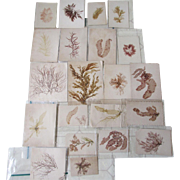 SOLD 23 Botanical Samples, Watercolor Paintings & Natural Specimens
