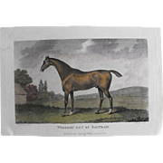 "REDUCED Lithograph Print of John Scott engraving of horse "" Whiskey Got By Saltram"""