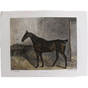 "REDUCED Lithograph Print of John Scott engraving of horse ""L. O. P."" from 1828: circ"