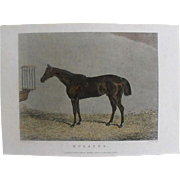 "REDUCED Lithograph Print of J Weble engraving of horse "" Mulatto"" from 1828: circa 1"