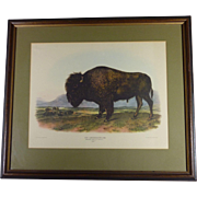"SALE The Classic Audubon "" American Bison "" Vintage Lithograph  Print,  Framed, Exce"