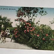 REDUCED Vintage Early 1900s Postcard Oleanders In Bloom, Bermuda Rutherford Native & Horse Mul