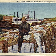 Early 1900s Black Americana  Real Life Linen Postcard Levee Scene And Waterfront Loading Cotto