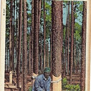 Real Life Black Americana Postcard A Native Of Dixieland at Work On a Turpentine Plantation