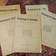 1883/84 Pathological Anatomy,Principle Diseases of the Human Body.. J A Jeancon, Progress Publ