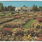 Jackson and Perkins Rose Garden Newark NY New York Vintage Postcard